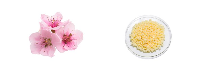 Mandlové květy + kandelilový vosk
