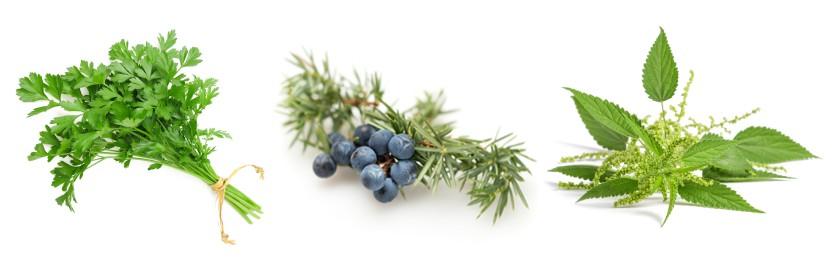 Složení doplňku stravy 3 bylinky na odvodnění